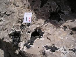 rudist limestone reservoir